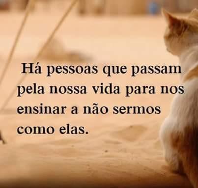 FB_IMG_1465055560503.jpg
