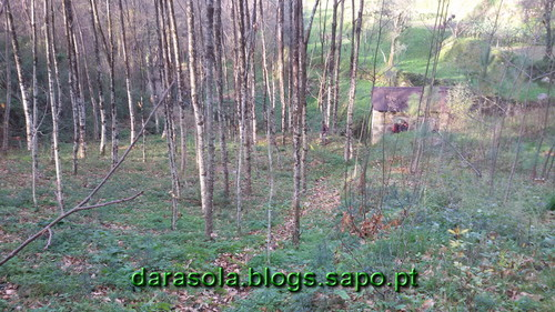 Burgo_15.jpg