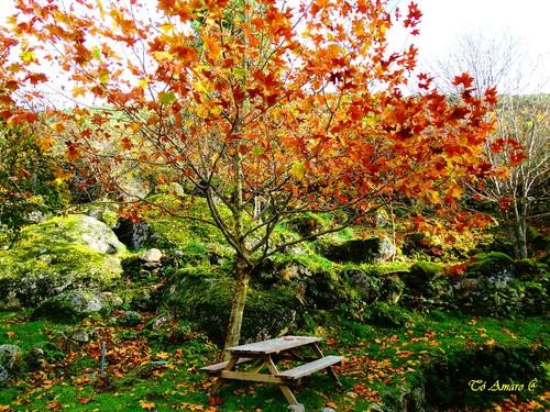 Fotos de Outono !!! 064.jpg