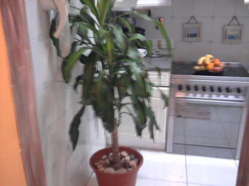 Planta 6.jpg
