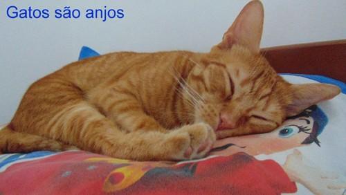anjoRiscas.JPG