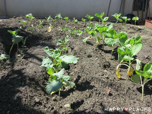 Agricultura2.5.jpg