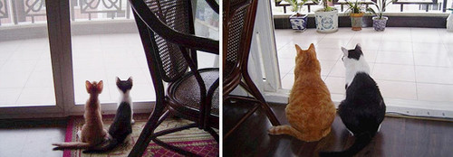 before-and-after-growing-up-cats-33__880.jpg