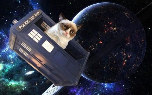 I-Travelled-The-Universe-Once-Funny-Cat-Picture.jp