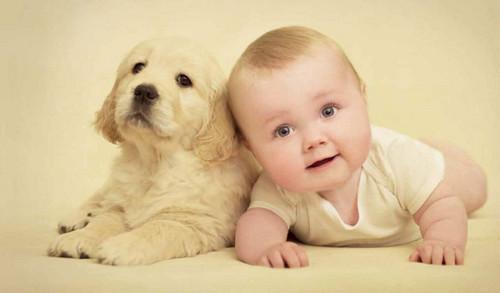 amor de cão e bebe.jpg