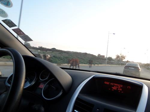 marrocos 2015 151.JPG