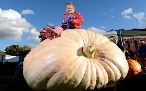POTD_giant_pumpkin_3070414k.jpg