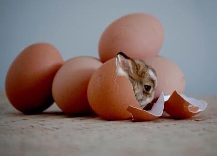ovos de páscoa.jpg