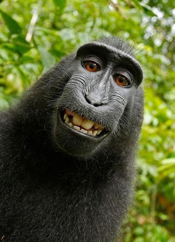 Selfie macaca.jpg