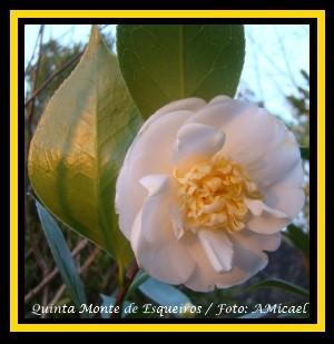 CRust Botanyuki - 300x309 - fDSC00127.jpg