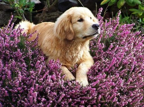 animais-florais-de-bach.jpg