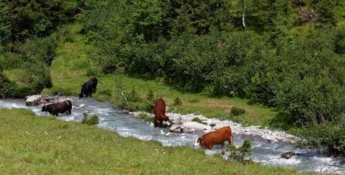 Ruisseau-vaches.jpg