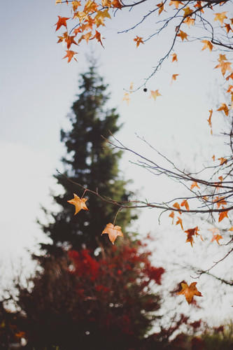 outono.jpg