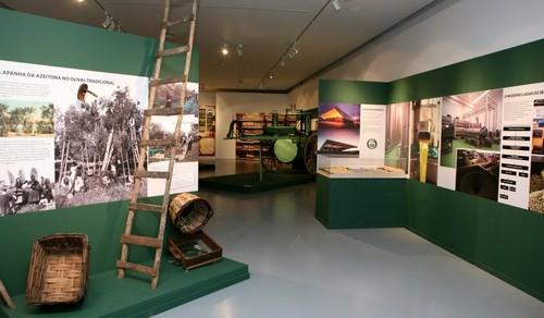 museu azeite.jpg