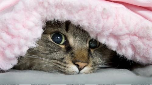 gato-debaixo-do-cobertor-630x354.jpg