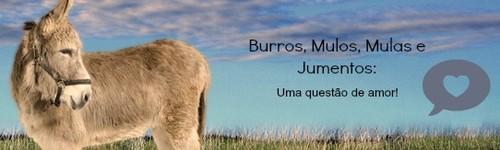 Burrobanner.jpg