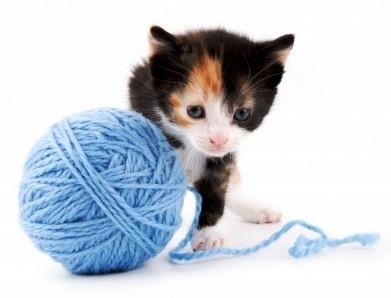gato-novelo-1.jpg