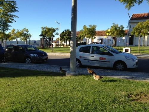 galinhas.jpeg