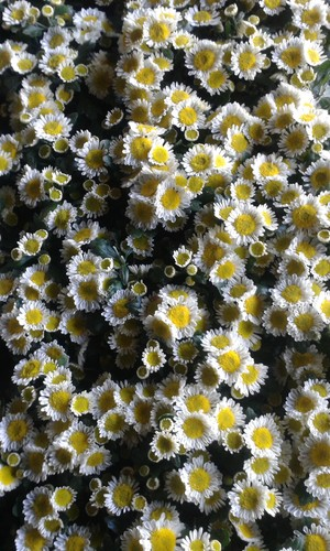 tapete floral.jpg
