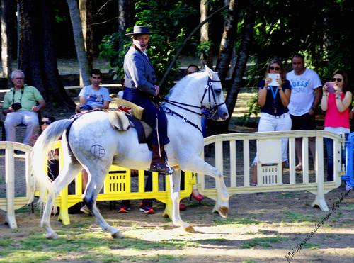 Festival equestreRibafria23072016Dblog.jpg