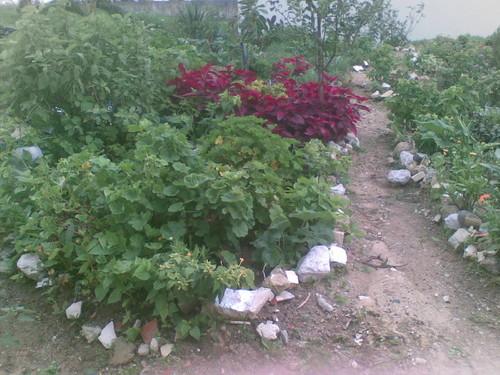 Jardim de Dona Vanda 3. Foto de F.M.C.L.