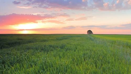 o paisage.jpg