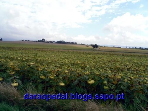 Canal_midi_dia_02_07.JPG