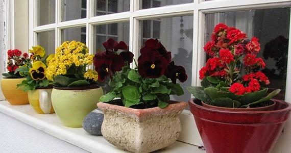 290420160820-913-flores.jpg