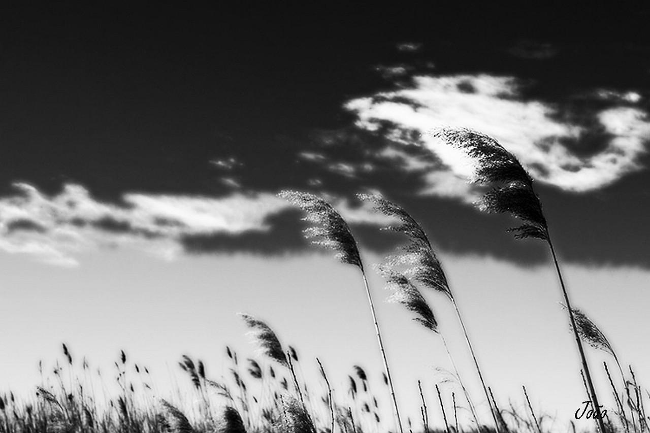 soprando-no-vento_fin2.jpg