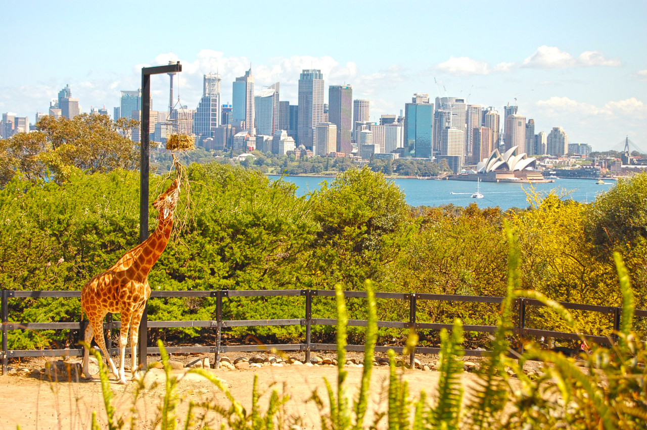 Vistas de Sydney desde o Taronga Zoo