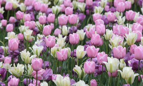 floresinhas.jpg