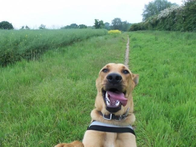 Selfie-Cachorro-11.jpg