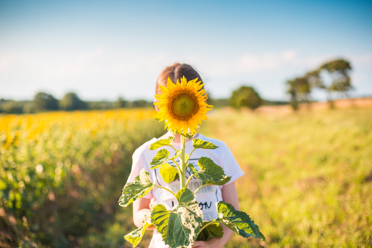 little-girl-with-sunflower-in-a-sunflower-field-pi