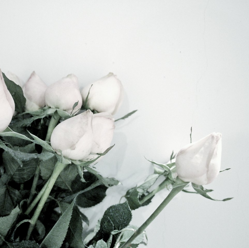 Rosas.jpeg
