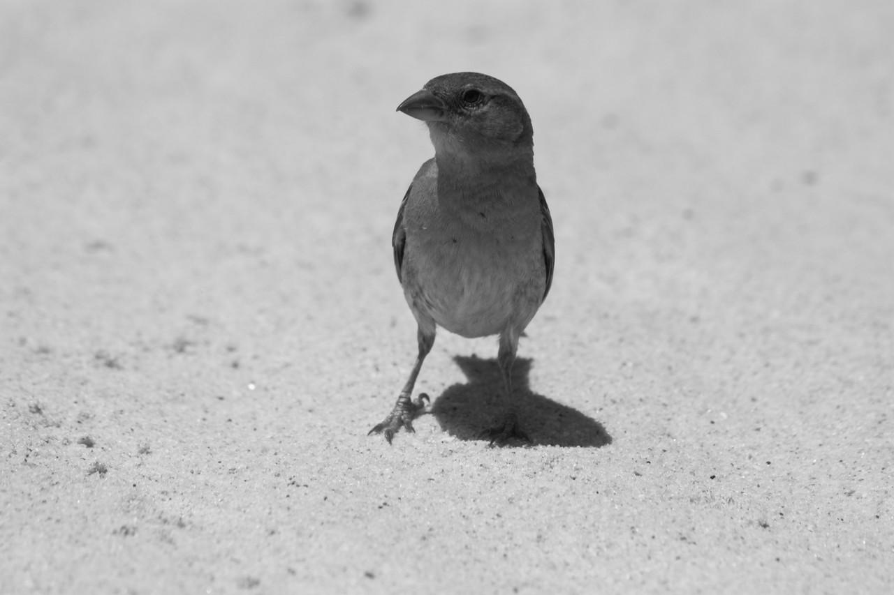 N.º 7299 — Praia do Barril © 2015