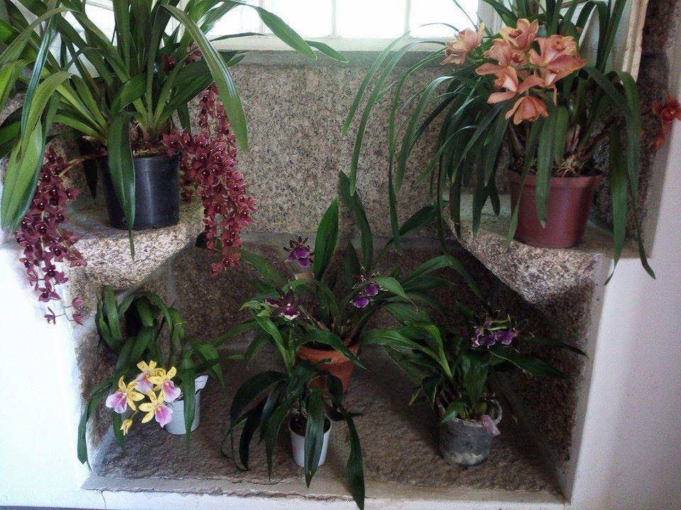 Expoisção Orquídeas.jpg