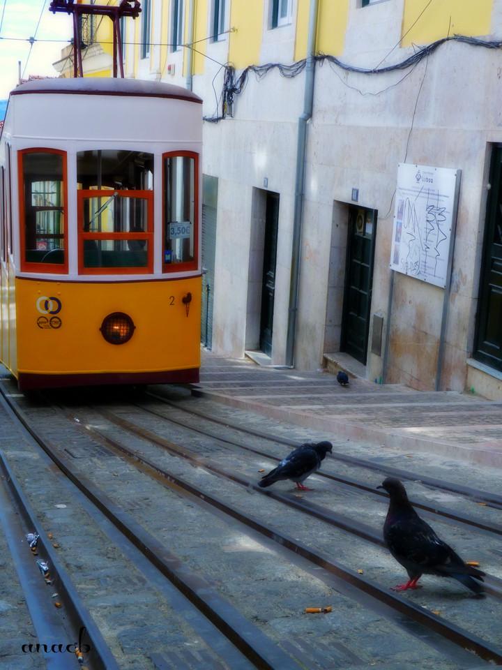 ao acaso #13 Elevador da Bica, em Lisboa.jpg