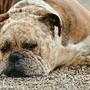 cão-doente-rex-16390.jpg