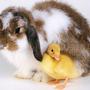 Easter_Buddies_800.jpg
