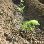 Agricultura1.6.jpg