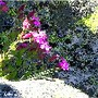 Flores resistentes