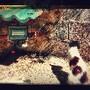 A gata e as pétalas que caem lentamente