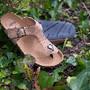 kos_cork_recycled car tyre sole_woman.jpg