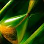 green-hourglass-250x188[1].jpg