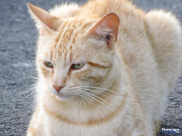 Gato - Portinho do Canal Milfontes