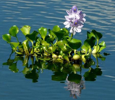 agua-pe-01@br_via_rural_ponto_com.jpg