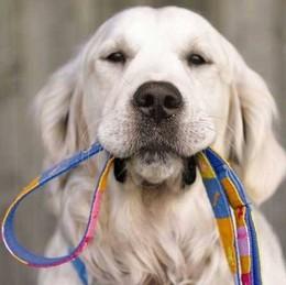 cão com trela.jpg