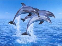 golfinhos.jpg