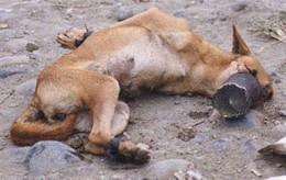 animais-maus-tratos.jpg