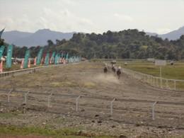 Corrida de Cavalos Taça SEJD 2015